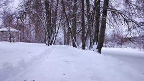 Schöne Winterlandschaft im Park Mazurino stock video footage