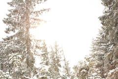 Schöne Winterlandschaft im Wald Lizenzfreie Stockbilder