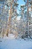 Schöne Winterlandschaft mit Schnee bedeckte Bäume - sonnigen Wintertag Lizenzfreie Stockbilder