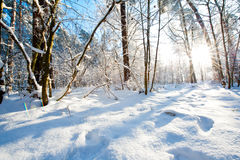 Schöne Winterlandschaft mit Schnee bedeckte Bäume - sonnigen Wintertag Lizenzfreies Stockbild