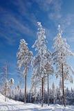 Schöne Winterlandschaft mit Schnee deckte Bäume ab Stockbilder