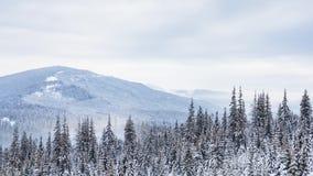 Schöne Winterlandschaft mit Schnee deckte Bäume ab Kaukasus-Berge, Georgia Gudauri stock video