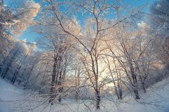 Schöne Winterlandschaft, schneebedeckter Wald an einem sonnigen Tag, Türspionsverzerrung, hohe schneebedeckte Bäume mit einem bla stockbilder