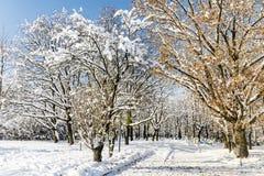 Schöne Winterparklandschaft von Sofia, Bulgarien Lizenzfreies Stockfoto