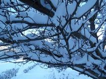 Schöne Wintersaison Lizenzfreies Stockbild