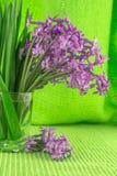 Schöne, wohlriechende Blumen kündigen Frühling an Lizenzfreie Stockbilder