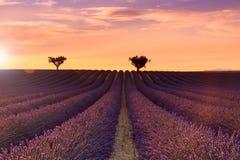 Schöne wohlriechende Lavendelfelder von Provence-Sonnenuntergang Stockbild