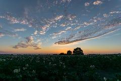 Schöne Wolken und Sonnenuntergang über einem Kartoffelacker im Westteil der Niederlande zwischen den citties des Goudas und Leide stockbilder