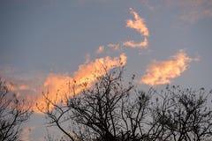 Schöne Wolken während eines afrikanischen Sonnenuntergangs Stockfotografie