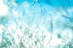 Schöne zarte Anlagen im Sonnenlicht auf dem Feld Stockfoto