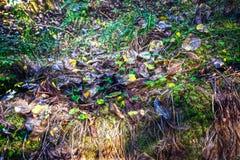 Schöne Zusammensetzung des Grases, der Blätter und des Mooses stockbild
