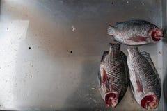 Schöne Zusammensetzung mit 3 Fischen und silbernem Stahlbehälter Stockfotografie
