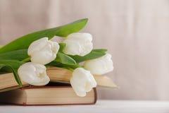 Schöne Zusammensetzung mit weißen Tulpen und alten Büchern auf einem beige unscharfen Hintergrund morgens hell Frühlingslesung lizenzfreie stockbilder