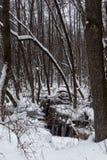 Schöner überschwemmter Wald in der Winterzeit Stockfotografie