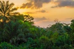 Schöner üppiger grüner westafrikanischer Regenwald während des erstaunlichen Sonnenuntergangs, Liberia, West-Afrika lizenzfreie stockfotos
