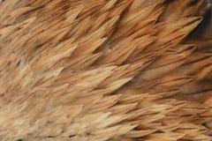 Schöner abstrakter Hintergrund, der aus dem Federkaiseradler besteht Stockfotos
