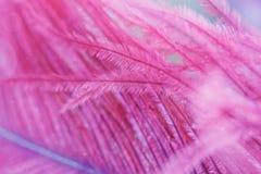 Schöner abstrakter Hintergrund mit purpurroter Feder lizenzfreie stockfotografie