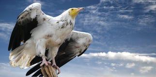 Schöner Adler auf Holz Lizenzfreie Stockfotografie