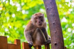 Schöner Affe, der auf einem Zaun sitzt Lizenzfreie Stockbilder