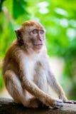 Schöner Affe, der in einem Park auf einem Baum sitzt Lizenzfreies Stockfoto