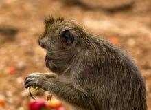 Schöner Affe im Zoo Lizenzfreies Stockfoto