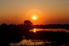 Schöner afrikanischer Sonnenaufgang dachte über See nach Stockfotos