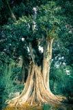 Schöner alter Baum in Andalusien stockbild