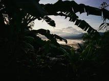 Schöner Anblick durch den tropischen Wald von Borneo, Sabah, Malaysia Stockfotos