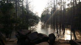 Schöner Angkor-Wald stockfoto