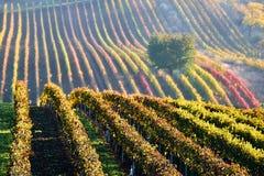 Schöner Apfelbaum im Nebel in den Weinbergen an der Dämmerung im Herbst Süd-Moravian Tschechische Republik lizenzfreie stockfotos