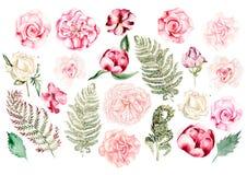 Schöner Aquarellsatz mit stieg, Pfingstrose, Petunienblumen und Farn Stockfotos