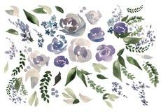 Schöner Aquarellsatz mit stieg, Pfingstrosenblumen und Blätter Lizenzfreie Stockbilder