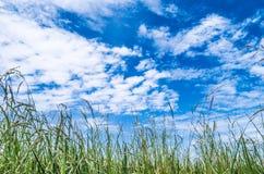 Schöner Auffrischungshimmel und leeren Feldfülle lizenzfreies stockbild