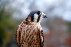 Schöner aufmerksamer Vogel Lizenzfreies Stockfoto