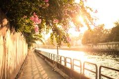 Schöner Bürgersteig zwischen dem Kanal, der rosa Blume auf Gehweg und dem Fluss bei Sonnenuntergang stockbild