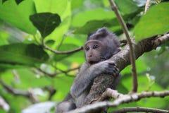Schöner Babyaffe, der in den Bäumen spielt Lizenzfreie Stockfotografie