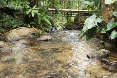 Schöner Bach im Land Chiang Mai lizenzfreie stockbilder
