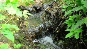 Schöner Bach mit den kleinen Wasserfällen, die in einen Wald fließen stock footage