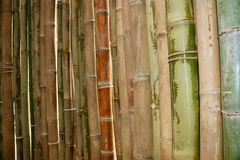 Schöner Bambus im Garten Stockbilder