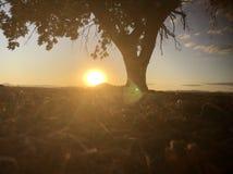 Schöner Baum Stockfotografie