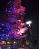 Schöner Baum stockbild