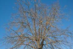 Schöner Baum Stockfoto