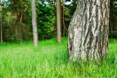Schöner Baum lizenzfreie stockfotografie