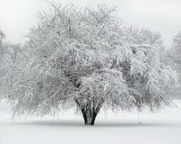 Schöner Baum abgedeckt mit Schnee Lizenzfreies Stockbild
