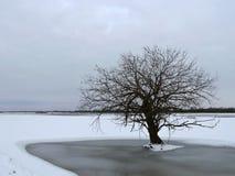 Schöner Baum auf dem Wintergebiet, Litauen Stockfoto
