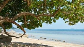 Schöner Baum auf einem Strand Lizenzfreie Stockfotos