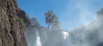 Schöner Baum auf Skylinen über schäumenden Wasserfällen lizenzfreie stockbilder