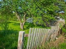 Schöner Baum gebrochener Zaun Lizenzfreies Stockbild