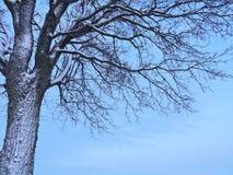 Schöner Baum im Winter Stockbilder