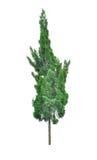 Schöner Baum lokalisiert auf Weiß lizenzfreie stockfotografie